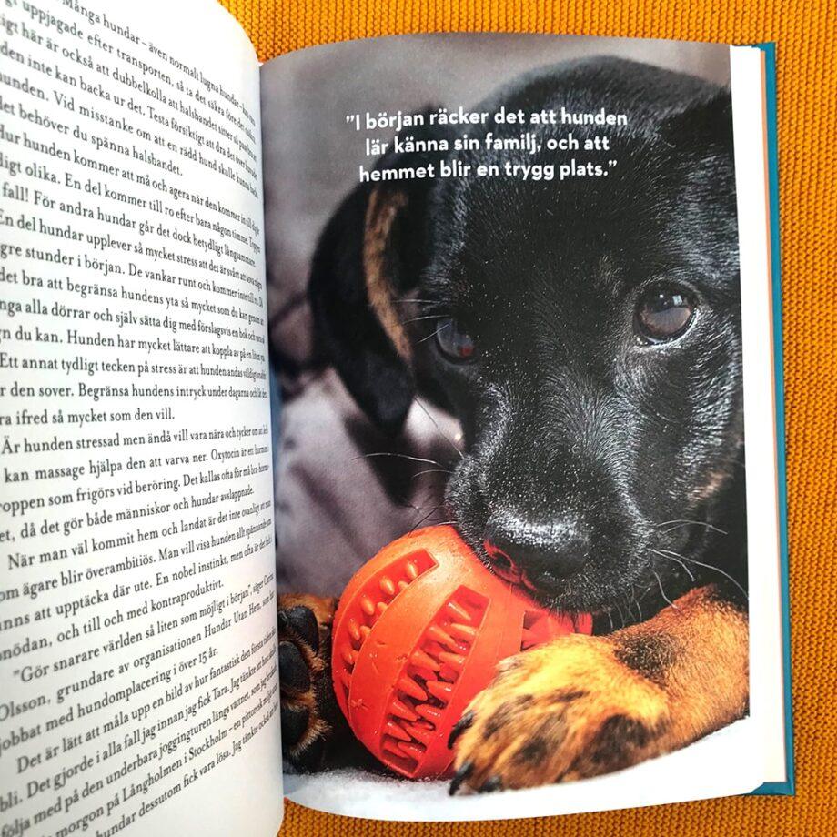 Adoptionsbok
