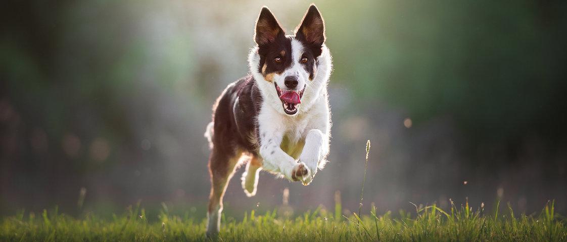 hundar utan hem
