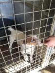 Hjälp CARE rädda hundar från Cork pound
