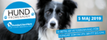 Gå årets viktigaste promenad – Hundpromenaden!