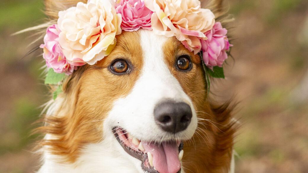Trevlig midsommarhelg önskar vi på Hundar Utan Hem!