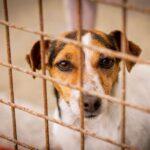 West Limerick Animal Aid