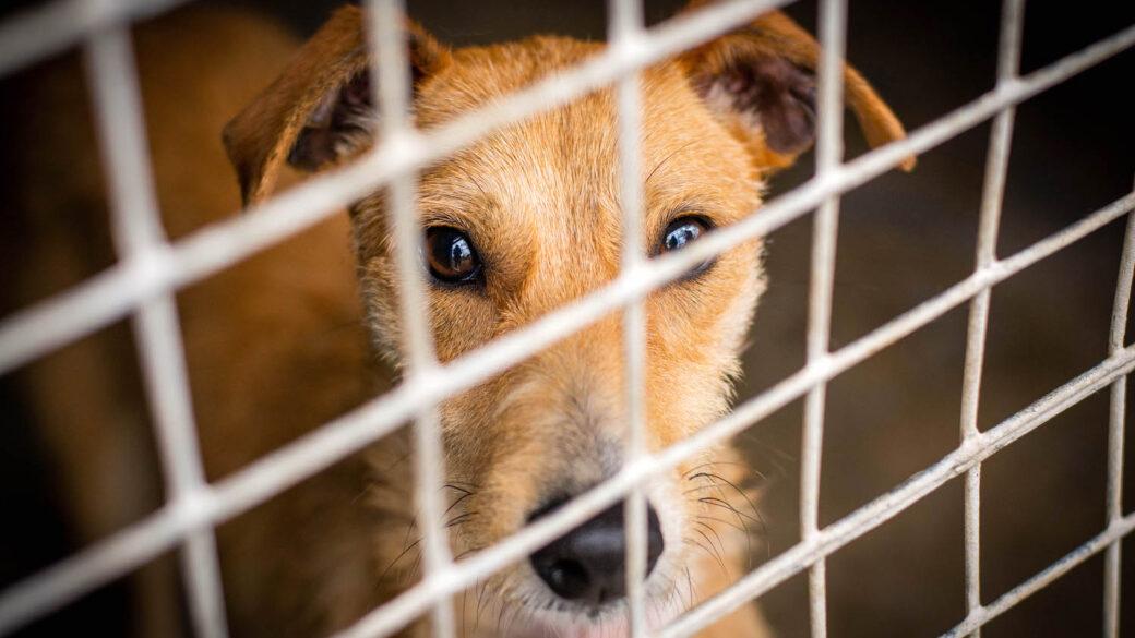 Hundar Utan Hem söker fundraisingansvarig