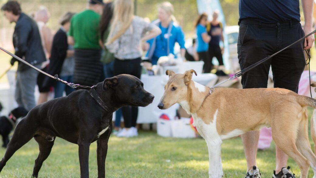 Hundar Utan Hem-dagen