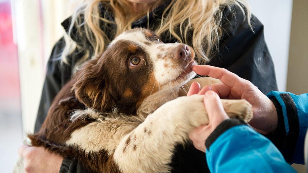 Varför adoptera hund från Irland?