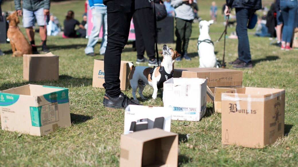 Aktiviteter på Hundar Utan Hem-dagen
