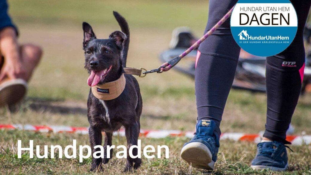 Hundparaden 2019