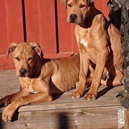 Hundar Utan Hems rehabiliteringshem