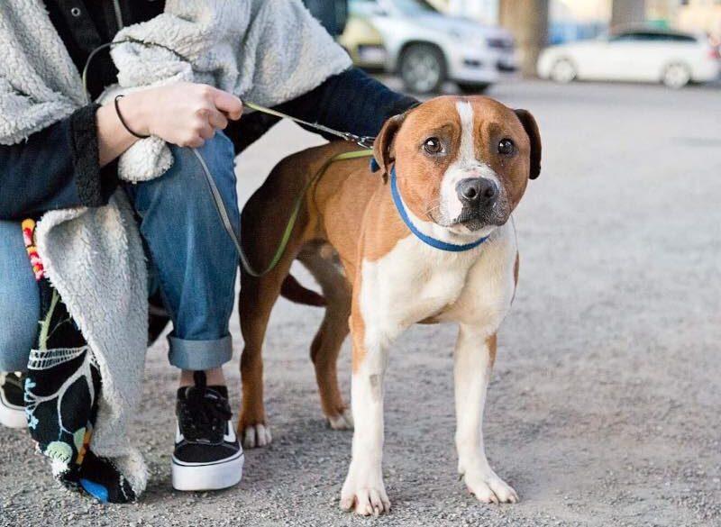 Hundar Utan Hem söker hundplacerare