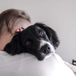 Vad är stress och hur tar det sig uttryck hos en hund?
