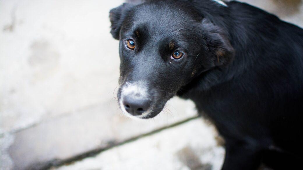 """Vad innebär det att ta hand om en """"rescuehund""""?"""