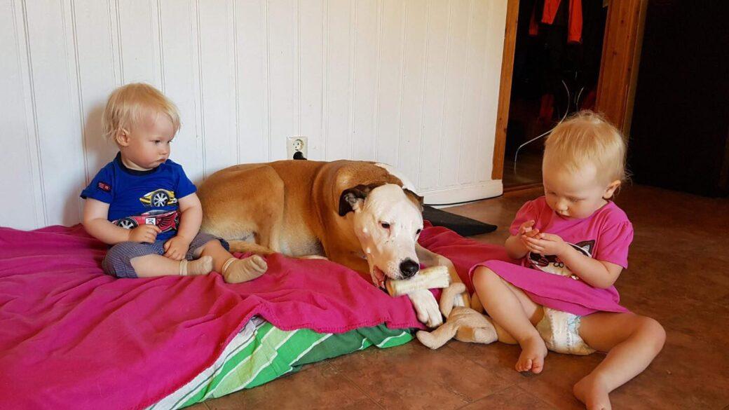 """Vad innebär det att ta hand om en """"rescuehund"""" från ett annat land?"""
