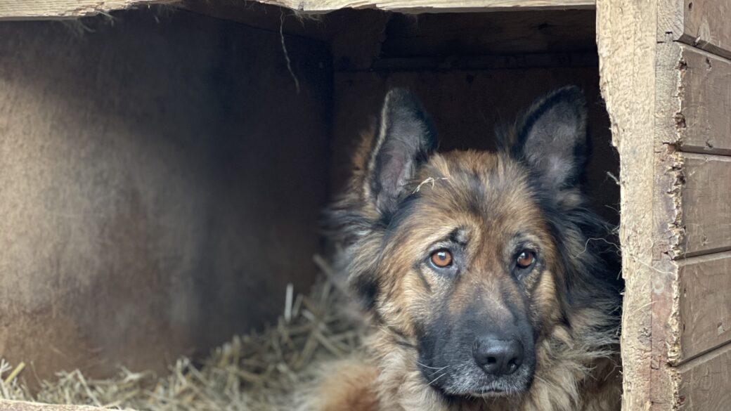 Våra veterinärvårdsrutiner