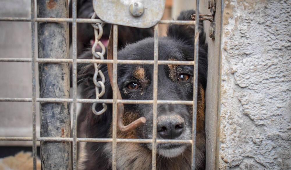 Insamling av foder och filtar till hundar i Polen