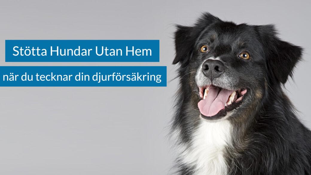 Stötta Hundar Utan Hem när du tecknar din djurförsäkring