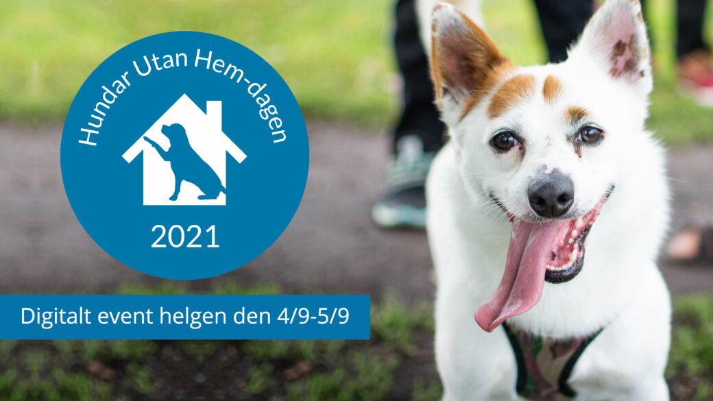 Välkommen till digitala Hundar Utan Hem-dagen 2021!