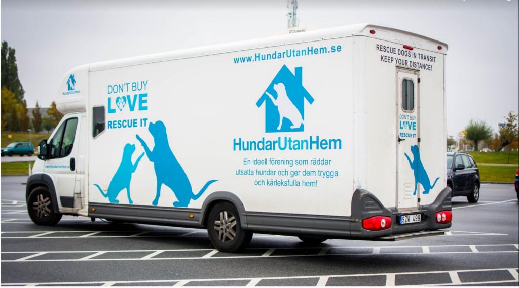 Hur kommer hundarna till Sverige?